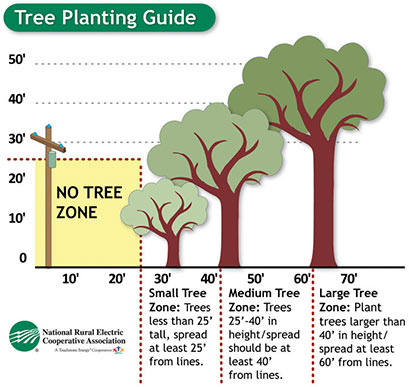 tree planting guide